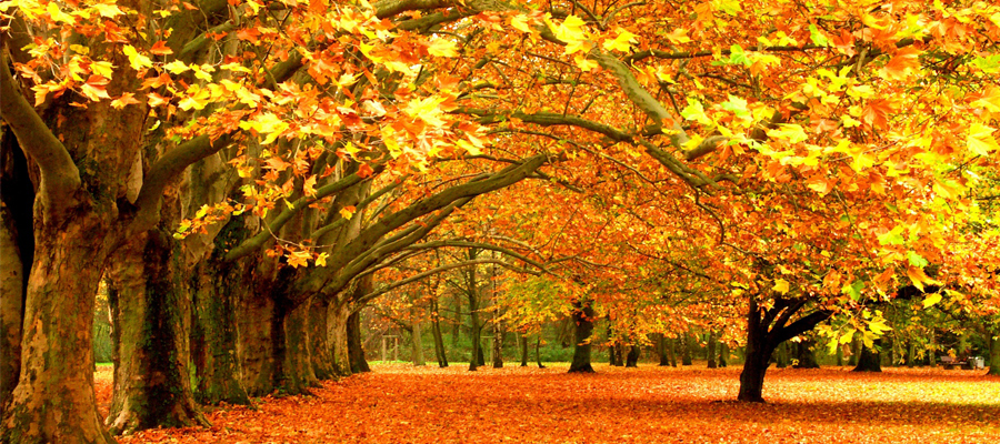 Still on the Fence About Autumn Yoga?